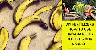 banana ls
