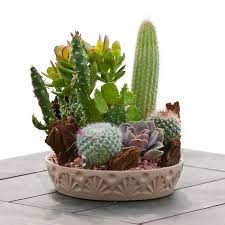 benefits of succulents cacti indoors