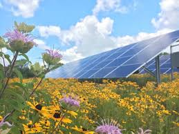 Image result for rural solar