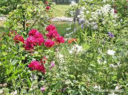 7 timeless cottage garden plants
