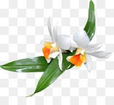 Fleurs Blanches PNG - 1214 images de Fleurs Blanches transparentes | PNG  gratuit