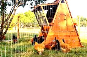 Portable Chicken Fencing And Netting Post On Sale Right Now