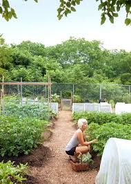 vegetable gardening as therapy