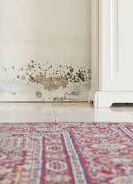 mold on the walls it and