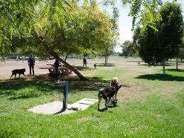 Sepulveda Basin Off Leash Dog Park In Encino Ca