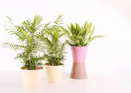 6 indoor plants that love the dark a