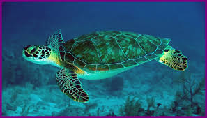 65 cute turtle wallpapers on wallpaperplay