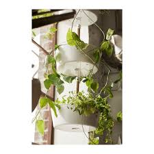 bittergurka hanging planter white