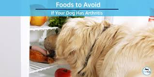 dog has arthritis
