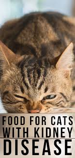 best food for cats with kidney disease