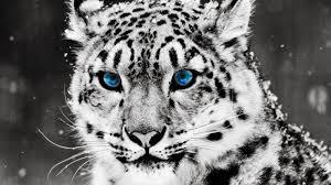 خلفيات حيوانات عالية الجودة لسطح المكتب Hd Wallpapers Animals