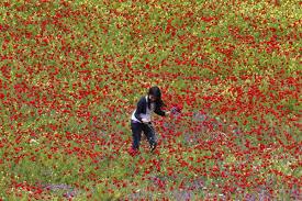اجمل صور شم النسيم 2020 واحلي صور الربيع والزهور وتلوين البيض