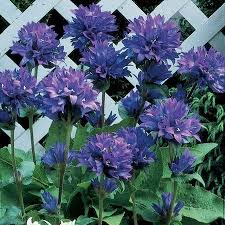 perennial plants for partial shade