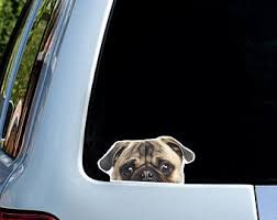 Pug Car Decal Etsy
