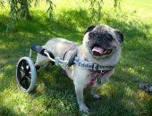 walkin dog wheelchair specs unique