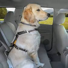 5 best car harnesses and seat belts