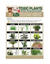 enhanced toxic poison plants flowers 5