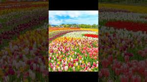 خلفيات الربيع جميلة يارب تعجبكم Youtube