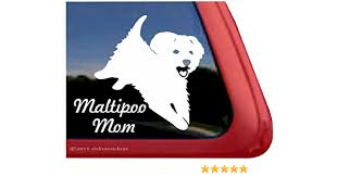Amazon Com Maltipoo Mom Playful Maltipoo Dog Window Decal Sticker Automotive