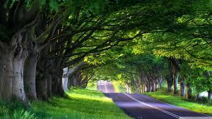 tree lined street 4k hd desktop