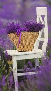 صور زهور البنفسج