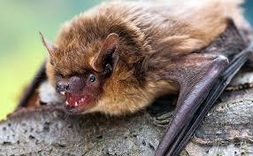 We're going bats in 2020! – Monkey Haven