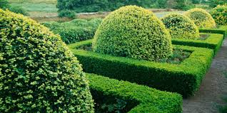 Boxwoods Make Gardens Better Monrovia