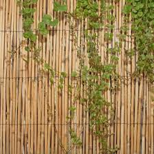 Screen Series 6 5 Ft H X 4 Ft W Privacy Screen In 2020 Garden Fence Panels Reed Fencing Bamboo Fence