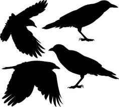 Flock Of Four Crows Vinyl Wall Decals Crow Silhouette Halloween Silhouettes Crow