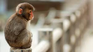 monkey r 1057034267 png v 2 5 backgrounds