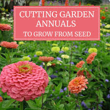 cutting garden annuals to grow from