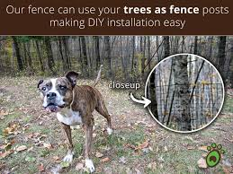Dog Fence Pictures And Video Watch Our Dog Fence Instructional Videos