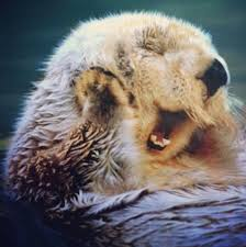 otters wallpapers free pictures on greepx