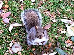 Canadian Squirrels Dangerous Pests Or Cute Wildlife Travel Tales Of Life