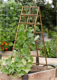 diy trellis for small garden