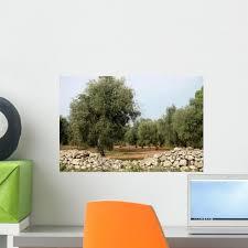 Olive Trees Wall Decal Design 2 Wallmonkeys Com