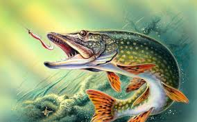 largemouth b backgrounds 46 pictures