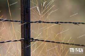 Barbed Wire Fence Post And Golden Autumn Prairie Grass Background With Grid For Rural Or Harvest Stock Photo Picture And Low Budget Royalty Free Image Pic Esy 043628902 Agefotostock