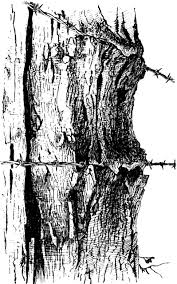 Fencepost Cutting Into A Tree Clipart Etc