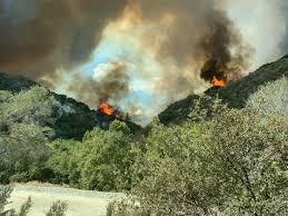 bobcat fire – NBC Palm Springs – News ...