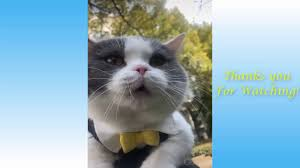 يوتيب مقالب قطط مضحكة جدا جدا حتى البكاء و الموت ترقص متحركة مضحكة