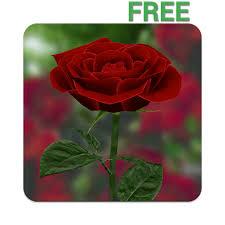 com 3d rose live wallpaper free