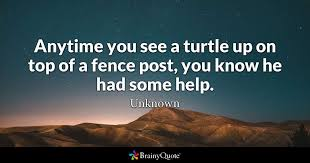 Unknown Anytime You See A Turtle Up On Top Of A