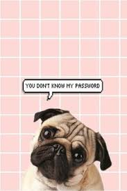 cute pug wallpapers vk85457 236x354