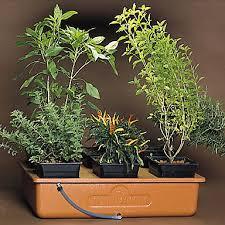 emily s garden gtg hydroponics