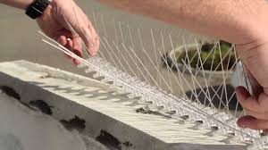 installing bird spikes you