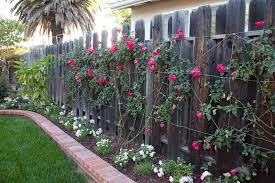 Landscaping For Privacy In Santa Barbara Walls And Fences Down To Earth Landscaping Inc Fence Landscaping Backyard Fences Farm Fence