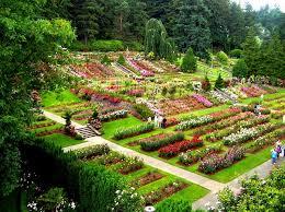 rose garden in bloom for 100 years