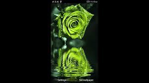 3d rose live wallpaper you