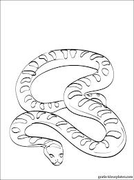 Anaconda Slang Kleurplaat Gratis Kleurplaten